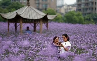 杭州:城市花海