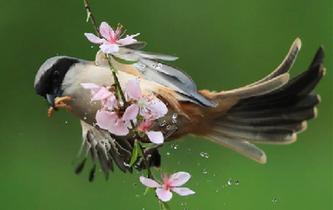 小鳥花間舞