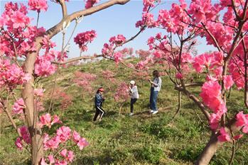 花开在四月